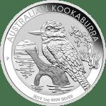 Silver Kookaburra