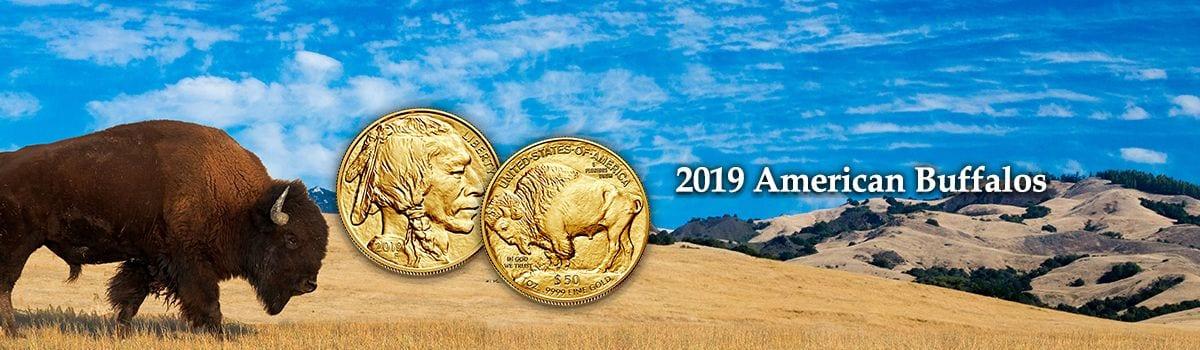 American Buffalos 2019 - Gold
